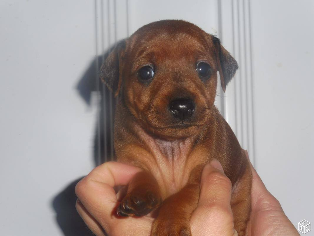 Un caractère trempé pour ce tout petit chien ?